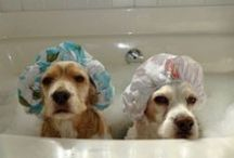 Animals Love Bathrooms Too!