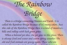 Rainbow Bridge  / by D Burnett 🐾