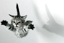 Gatos, gatas, gatinhos