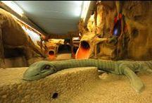 DinoSpa Spa Hotel / Un mágico y divertido Spa para niños con temática de dinosaurios y muchos toboganes, rampas, pasadizos, pelotas...
