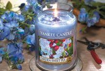 Fragancias Clásicas / Fotografías de productos Yankee Candle