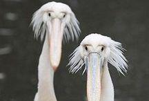 rare snuiters,  vreemde vogels