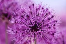 Fotografie květin