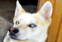my dog / born in 26 / 2/2015 died     20 /2 / 2016