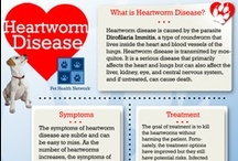 Heartworm / Not only do we have plans to rescue and care for these wonderful dogs, we also want to take time to educate the public on the importance of spay and neutering, year-round heartworm prevention and yearly vaccinations.