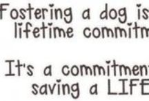 Fostering Dogs