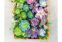 succulents, cacti, & houseplants / plants to grow indoors; terrariums