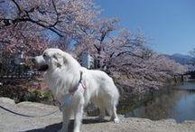 Classic Sakura Tour / Here are some pics from my Classic Sakura tours