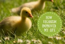 The Vegan Scholar / Posts from my blog!