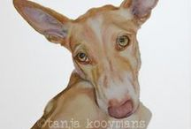 Podenco Watercolor & Art Prints
