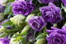 Цветы / Любимые цветы