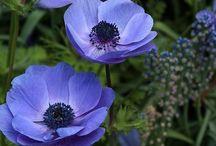 Цветочки#flowers