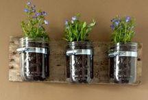 Plante / Plants, Plant Pots