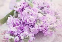 Purple paradise:)