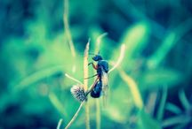 Fotografia (Natureza)