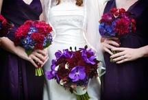 Wedding / by Amanda Forsyth