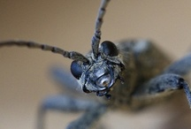 Arthropods United! / by Anthony Hicks