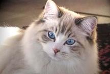 Gatos (Cats)