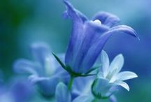 Flores (Flowers)