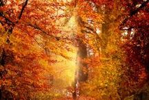 Autumn / All things Autumn...my favorite season! / by ╰✿Audra
