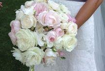 All things Peonies / Sheer Elegance- Beauty & Fragrance