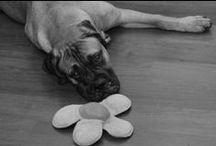 The Richter Bullmastiffs / Our Shop Dogs-Past & Present