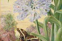 marianne north botanical artist
