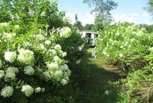 Growing Flowers in RVA / Locally grown flowers for our shops in Richmond & surrounding area.
