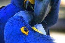 Natureza e Animais a beleza que Deus criou