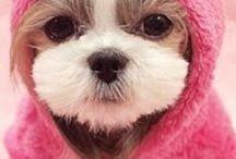 Dogs (Pets) / amamos cachorrinhos fofos.... anw...