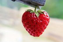 Morangos !!! / Minha Fruta Preferida por isso vamos de receitas e mais receitas!