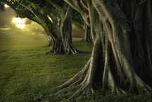 """Tales of Trees / """"Trees are Earth's endless effort to speak to the listening Heaven.""""    Rabindranath Tagore"""