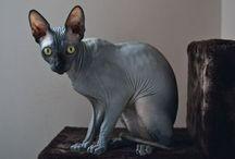 Cats / kitty kats