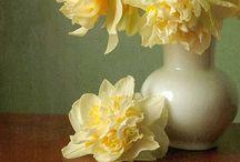 Flowers and flower art / Flowers
