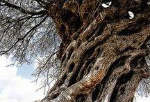 Old tree Art / #tree #tree root #bark of a tree #木 #木の根 #木の肌