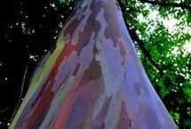 Tree bark Art / #Tree bark #樹皮