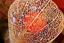 Reaf & Seeds Nature Art / #Reaf #Seeds #Stem#葉#種#茎