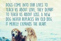 Pet Quotes/Pet Jokes / A board to inspire and make you laugh!