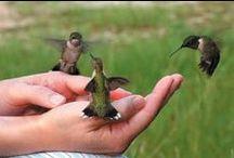 Ptáci - birds / Ptáci - Animals, birds