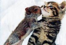 Zvířata - Animals / Animals, mammal, mammals, savci