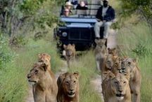 South Africa / by Education Abroad SCSU