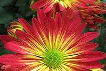 Flowers and Plants / Flowers and plants / by Cindy Bounds