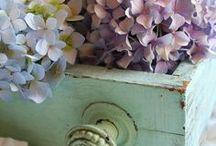 Hydrangeas beauty / hortensias, hortenzie