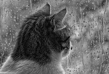 ;;; rainy day ;;;