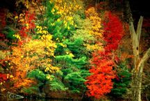 Beauty of Nature / Nature and all its splendor / by JJ