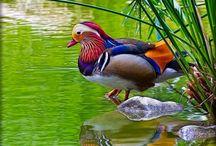 Birds / All kinds of beautiful birds  / by JJ