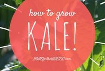 Gardening Bliss / Helpful tips & tricks for growing your own vegetable garden.