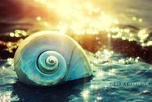 κοχυλάκια - seashells...!!!!