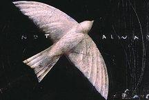Birds / Birds of all kinds, in any medium