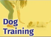 Dog Obedience Trainer/Instructor